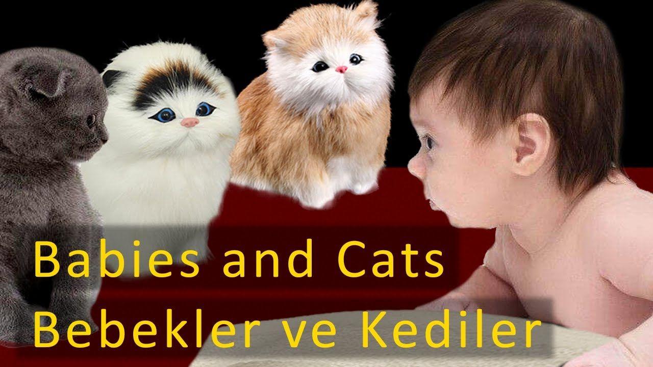 FUNNY CATS AND BABIES | KOMİK KEDİLER VE BEBEKLER 😺