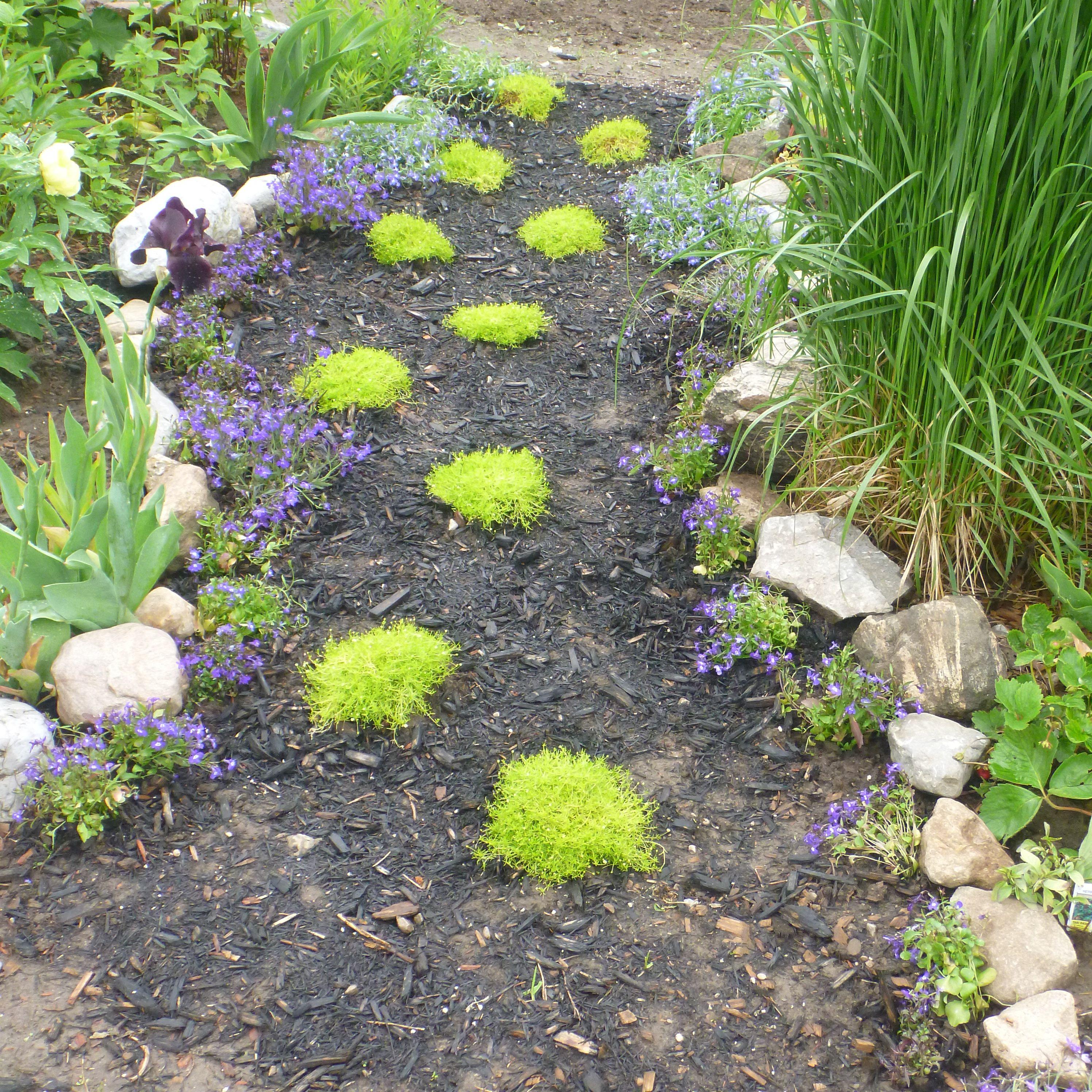Pin on garden of mine