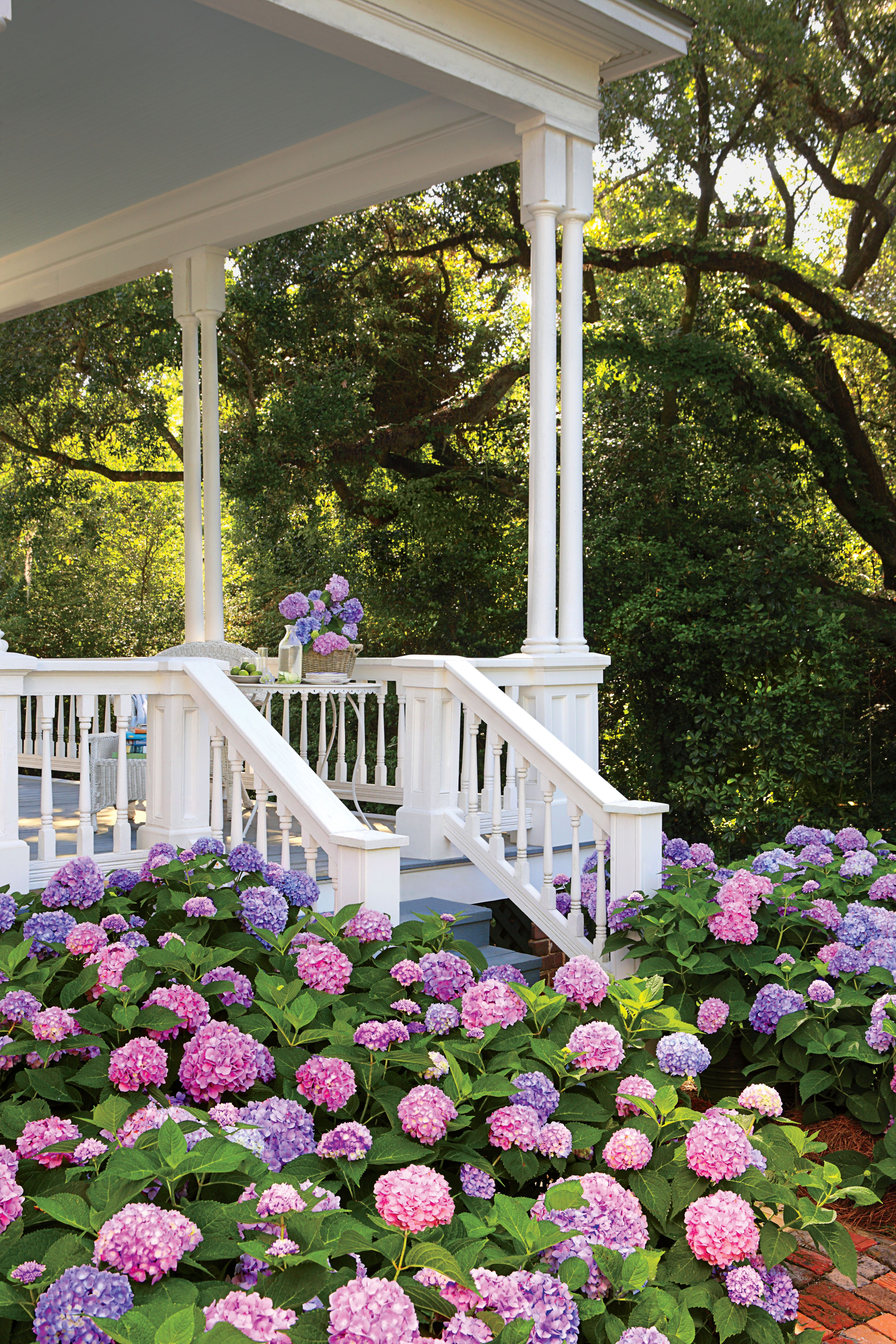 Enjoy Endless Summer Hydrangea Garden Landscaping Beautiful Gardens