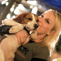 Did You Know That 96 Of Dogs Used In Laboratory Testing Are