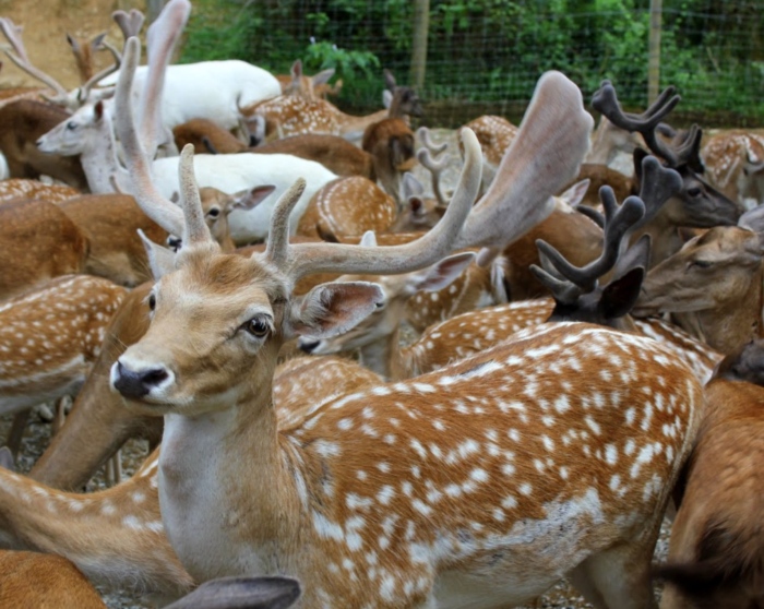 The One Of A Kind Deer Park In Tennessee That Your Kids