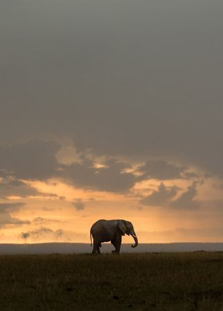 elephant-backdrop-in-kenya-jonas-peterson-the-knot-blog-kenya-travel-destinations.jpg