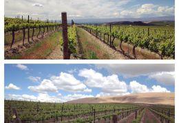 WASHINGTON STATE WINERY NEWS #WAwine #Wine #Food #Foodie #Travel