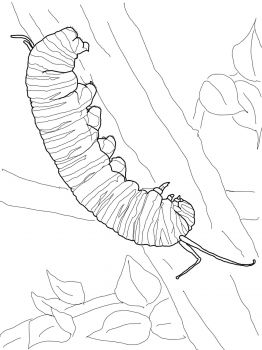 Monarch Caterpillar in 2019 | Butterfly coloring page ...