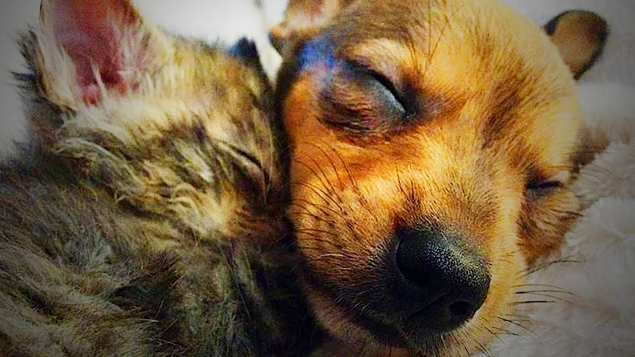 Cute Puppies and Kittens Together 🐱🐶 Funny Cats and Dogs ...