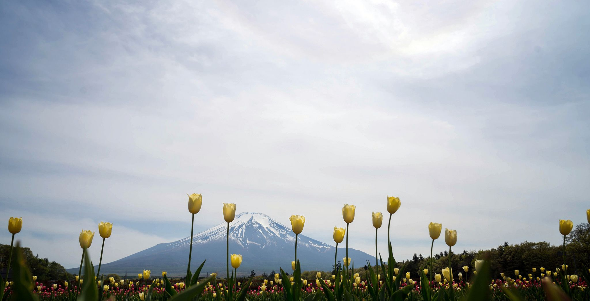 Hi Mt Fuji You Are As Tall As We Are Fuji This Is Us
