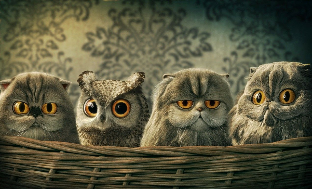 Hd Funny Owl Desktop Wallpapers Download Обоисовы