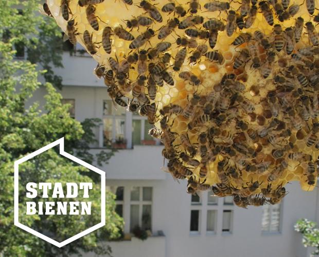 rettet die bienen imkerkurs bei stadtbienen e v gewinnen. Black Bedroom Furniture Sets. Home Design Ideas