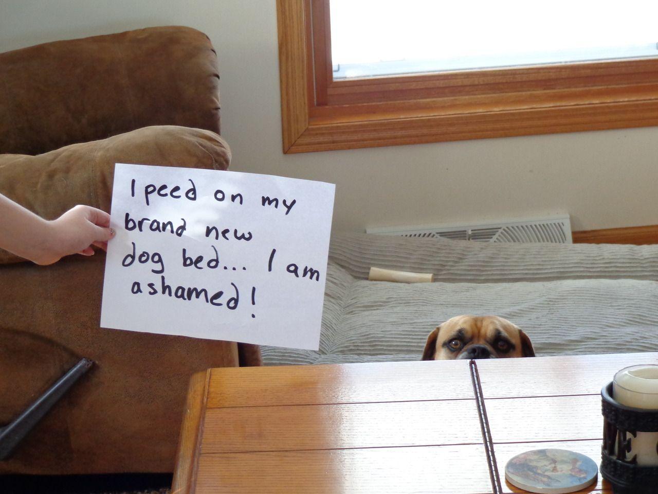 I peed on my brand new dog bed…I am ashamed! Dogs, Dog