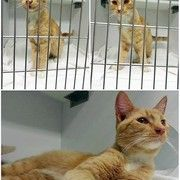 Found Is At Vilonia Animal Clinic Pet Clinic Arkansas Tornado Pets