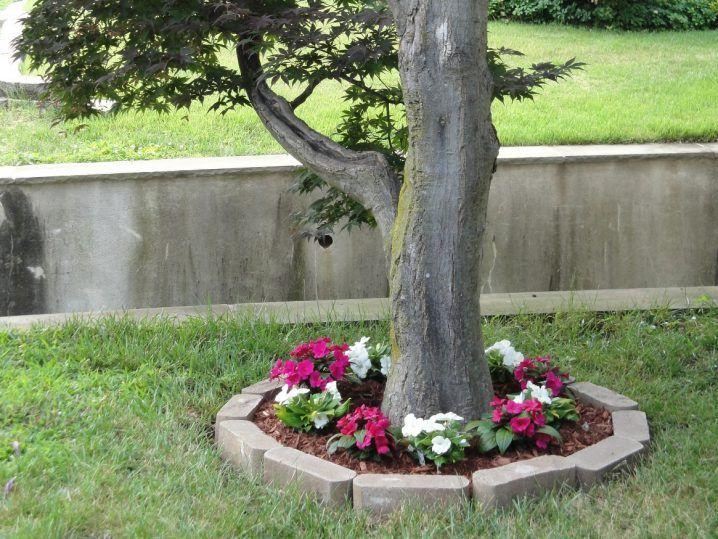 Canteros de flores alrededor de rboles flor jardines y for Canteros de jardin