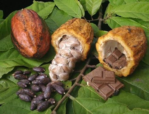 Three Types of Cacao Beans (with images, tweet) · AliciaDaner · Storify
