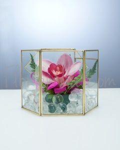 Orquidea Cymbidium En Caja De Cristal Orquídeas Cajas De