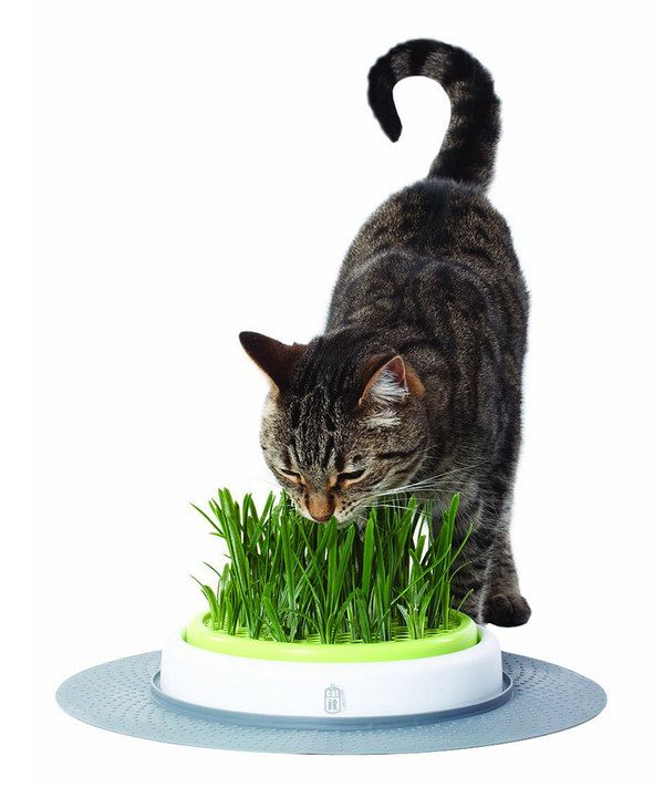 Look at this Cat Grass Garden on #zulily today!