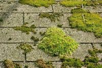 Eco Friendly Moss And Algae Removal Garden Oasis Outdoor Roof Edge