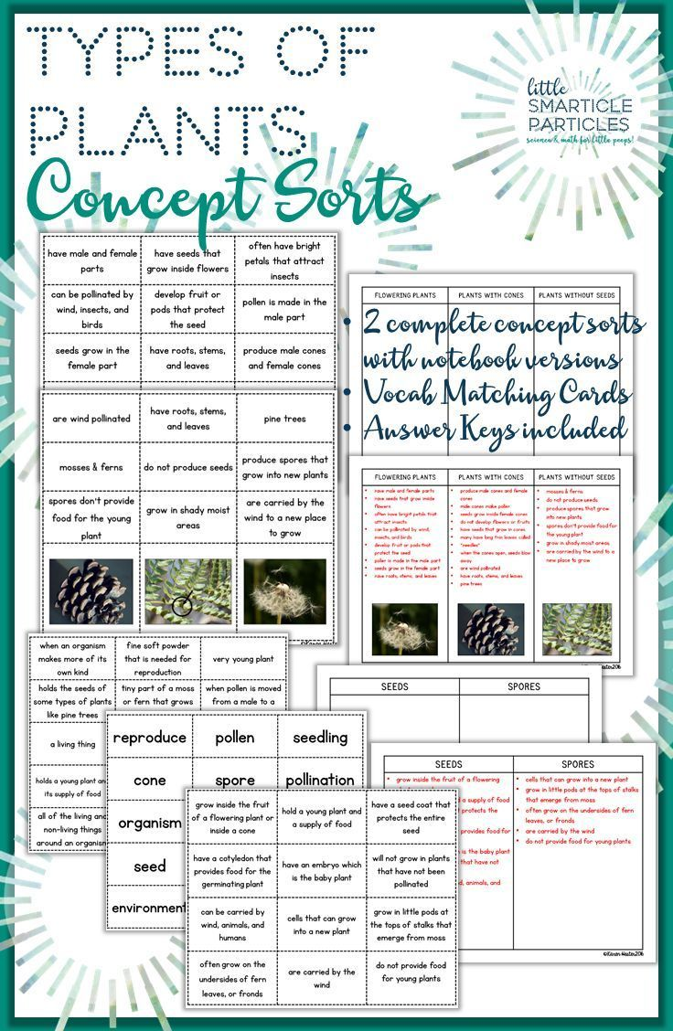 Types Of Plants Science Concept Sorts  Formative Assessment