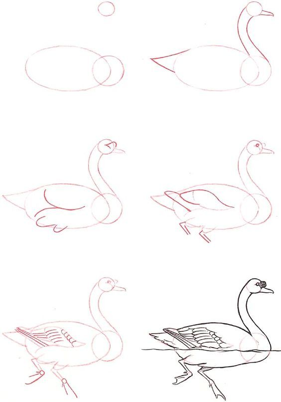 Learn to draw: Swan: | how to draw step by step | Pinterest ...