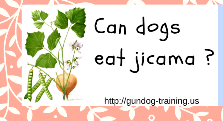 Can dogs eat jicama Can dogs eat, Dog eating, Jicama