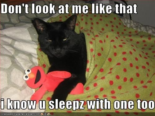 Funny Cat Captions Funny Pictures Of Cats With Captions With
