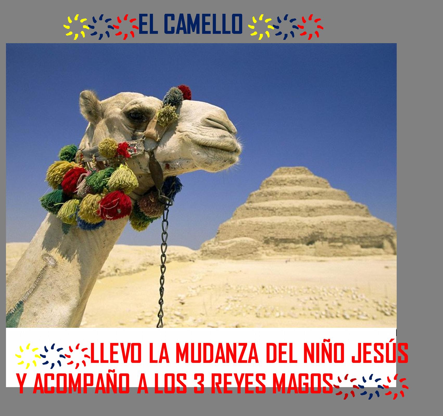 EL CAMELLO LLEVO LA MUDANZA DEL NIÑO JESÚS,JUNTO A SAN JOSE Y LA VIRGEN MARÍA  Y ACOMPAÑO A LOS 3 REYES MAGOS.
