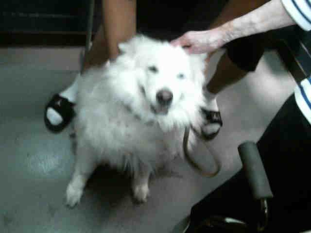 Pin By Trudy Hackney On No Longer Listed No Longer Available Outcome Unknown Killed Pet Care Animals Beautiful Samoyed