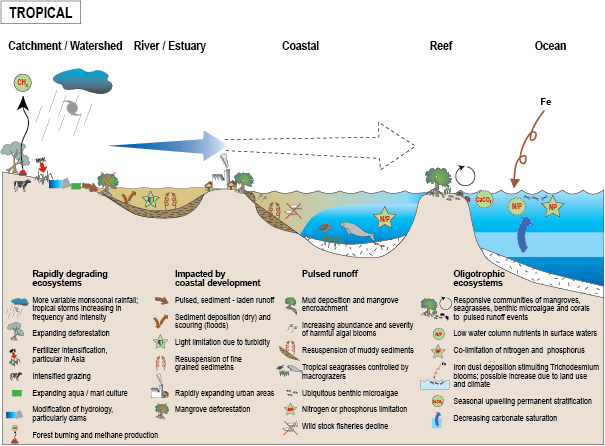 """marine ecosystem information Marine ecosystems can be defined as the interaction of plants, animals, and the  marine environment by """"marine,"""" we mean of, or produced by, the sea or ocean."""