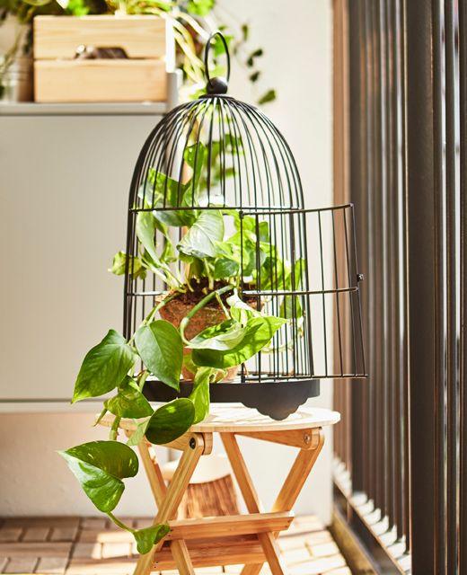 Cage d 39 oiseau d corative mettant en valeur une plante - Cage oiseau decorative interieur ...