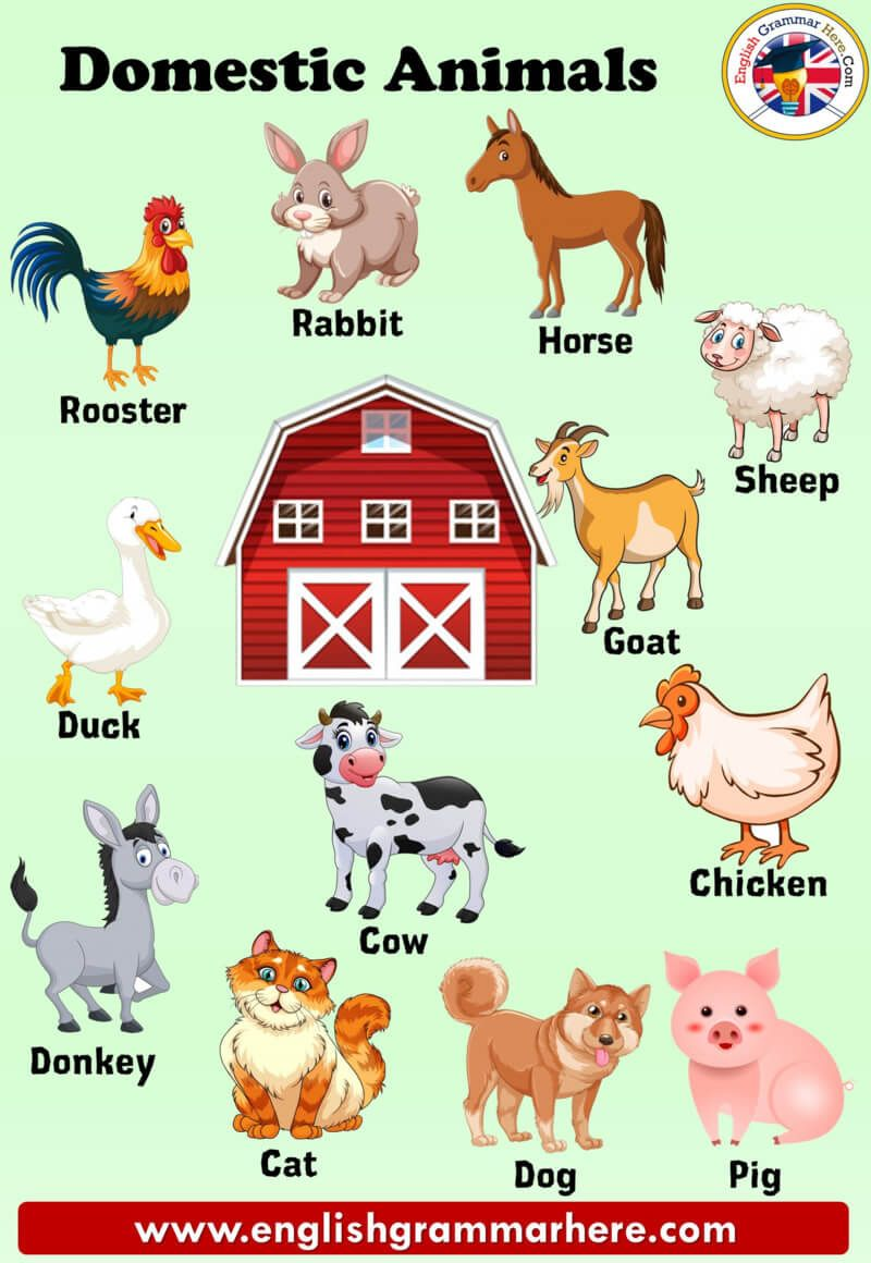 10 Herbivorous Animals Name Animals Names List If You Want To Be Able To Use The English L In 2020 Animal Pictures For Kids Herbivorous Animals Farm Animals Preschool