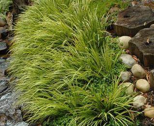 Plants and flowers | SA Garden and Home