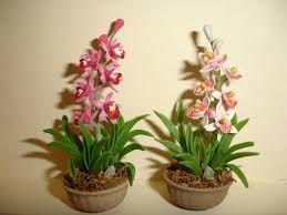 orquideas plantas - Buscar con Google