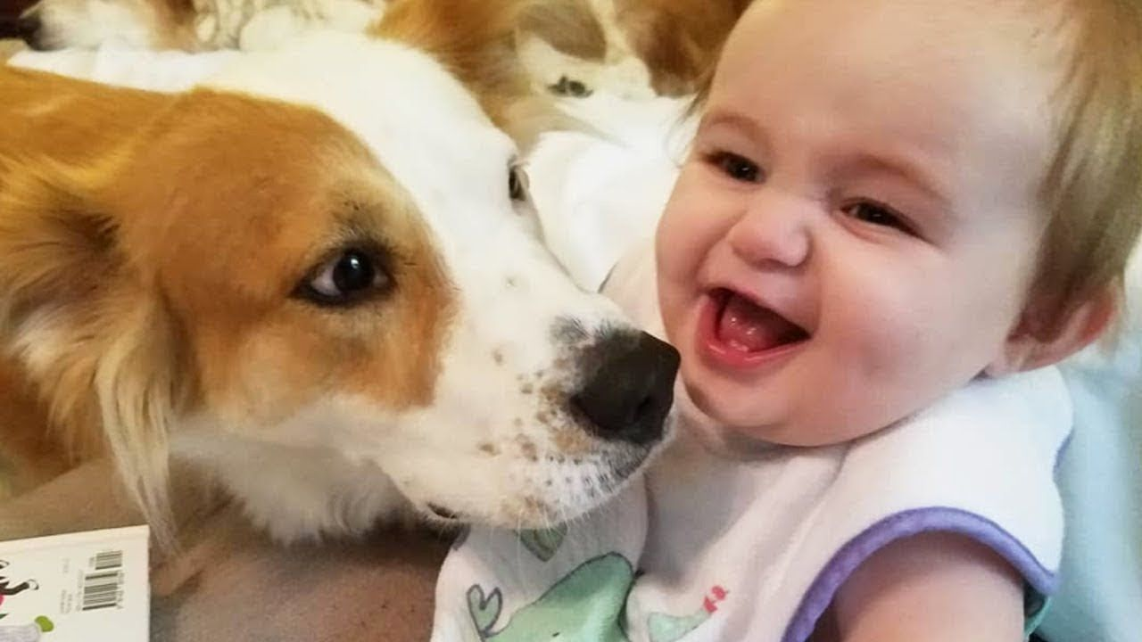 Funny Dog With Baby Belly Laughing Very Happy Dog Loves Baby