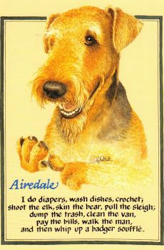 An Airedale's work is never done!