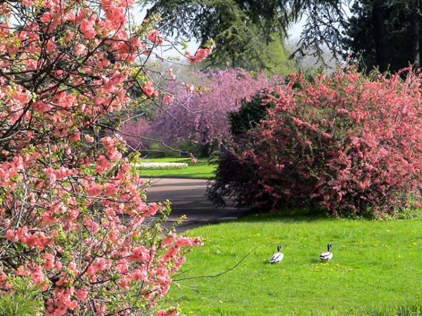 Fleurs et paysages printemps jardin d 39 ornement for Jardin ornement fleurs