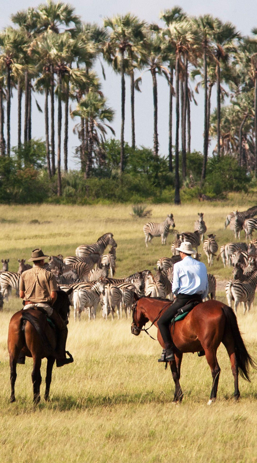 Rencontre entre chevaux et zèbres pendant un safari dans le désert du Kalahari.