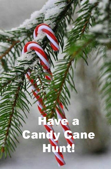 Imagine the excitement your children or grandchildren will have as they search through the branches or inside the house for candy canes. The surprise and delight as they find one is priceless. Want…