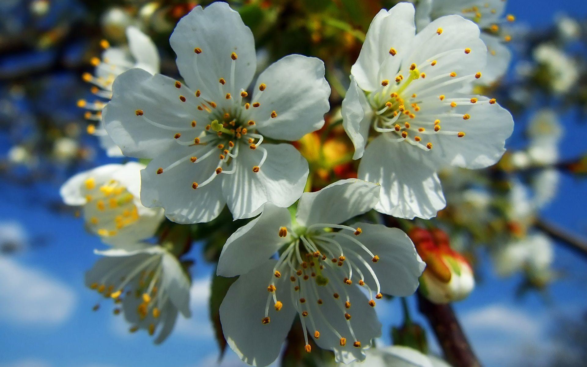 Весенние картинки про цветы
