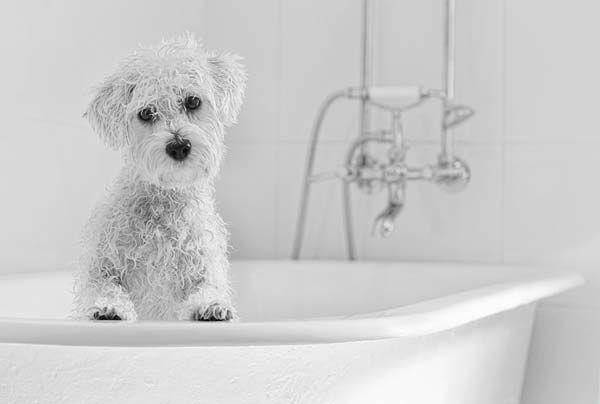 Bath time - love the lighting - photo by Nicole Goggins