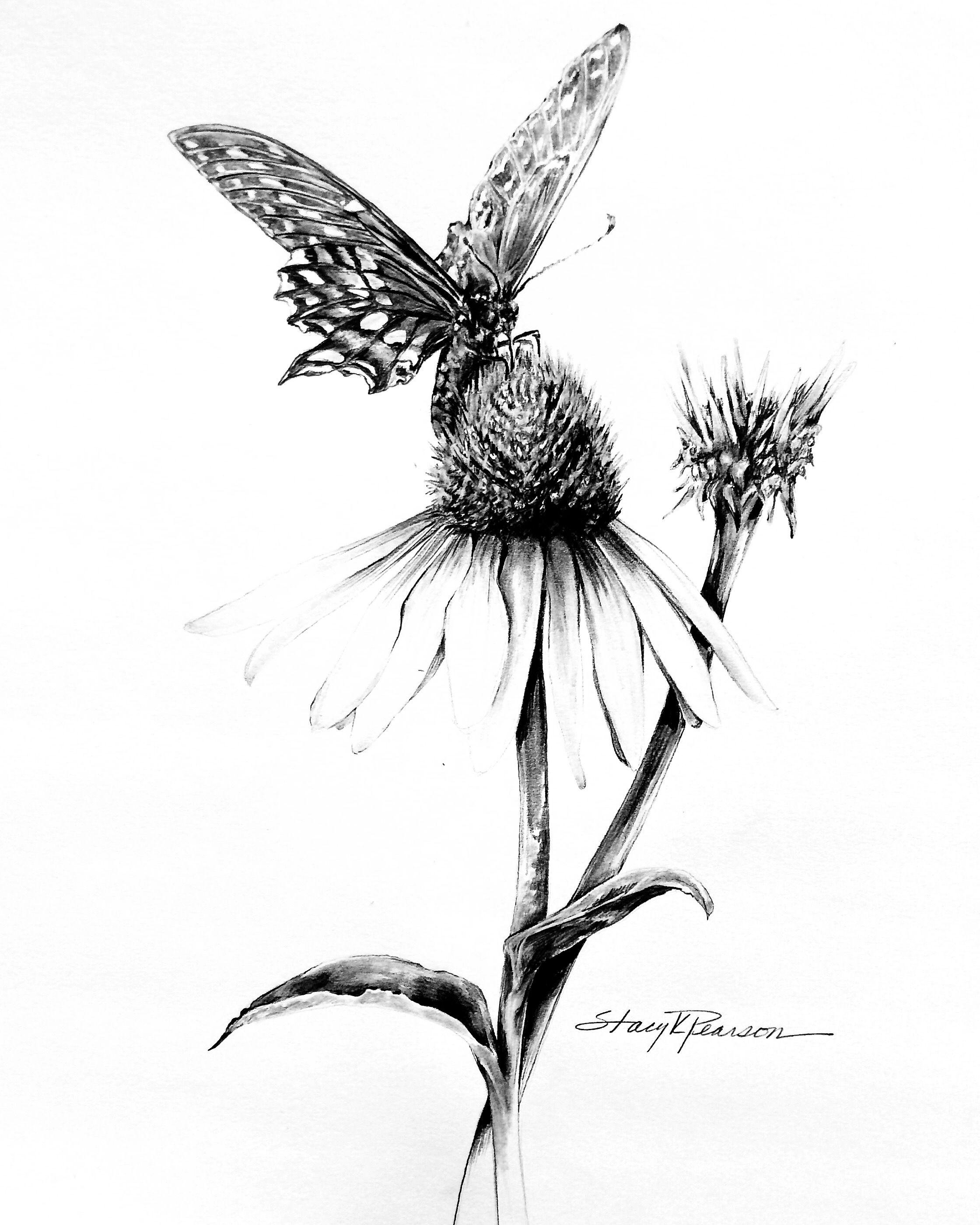Skpearson Art Coneflower And Friend Butterfly Pencil Drawing Pencil Drawings Art Drawings