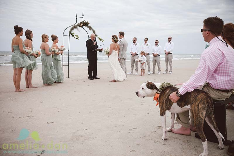 The S Dog Cupcake Sporting A Fancy Bowtie In Coordinating C At This Pawleys Island Beach Wedding Coordination By Dramseyweddings Flowers