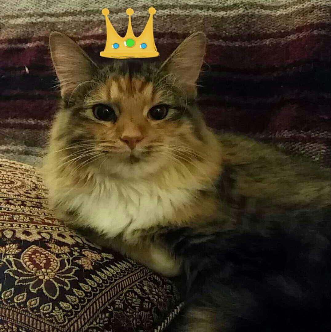 My darling little princess Fiona