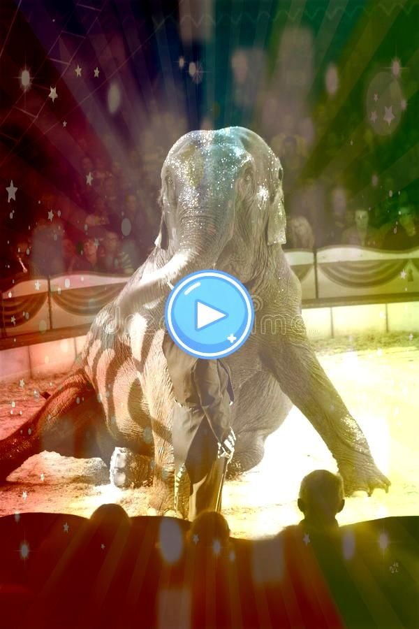 circus act Circus act with an elephant in the arena of circus Renz in Elephant circus act Circus act with an elephant in the arena of circus Renz in  Digital Download Pri...
