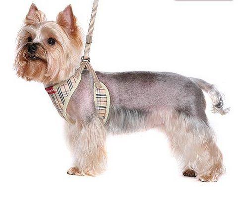 шлейка для маленьких собак своими руками - Поиск в Google