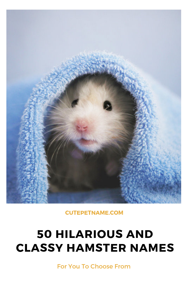 50 Hilarious And Classy Hamster Names For You To Choose From