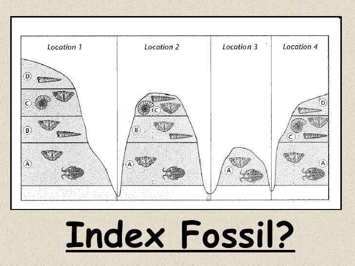 Radioactive dating of fossils worksheet