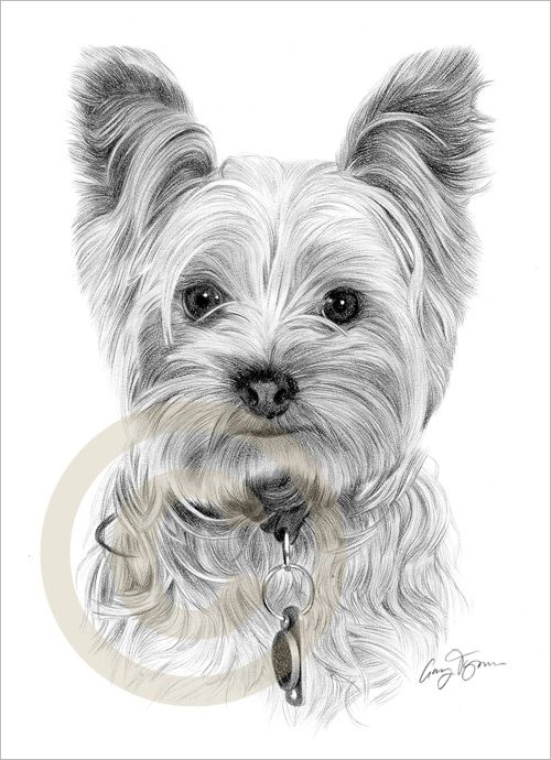 Dog Yorkshire Terrier Le Art Pencil Drawing Print A4 Signed By