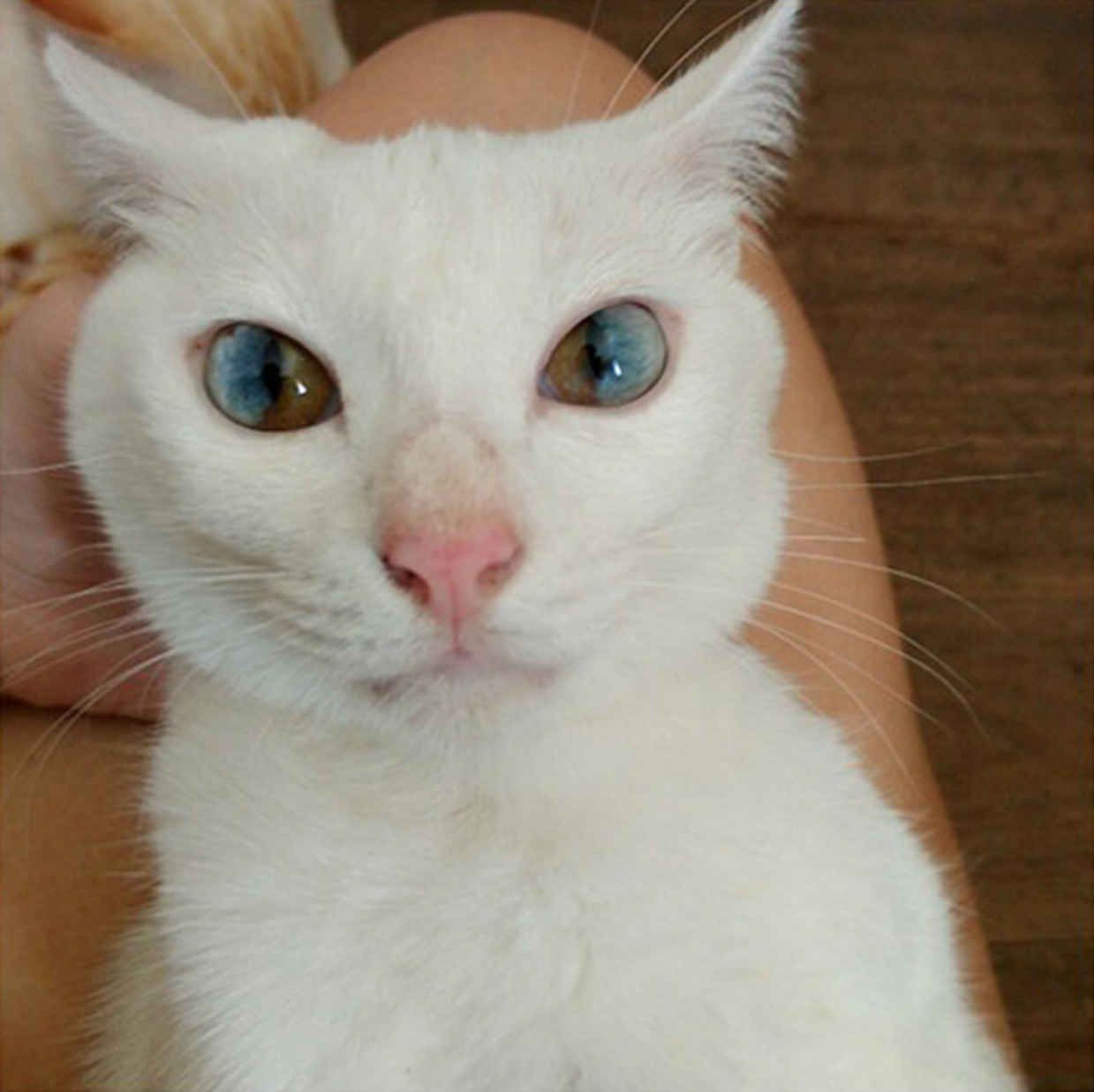 Color cats like - This Cats Amazing Eyes Are Like Portals To Another World