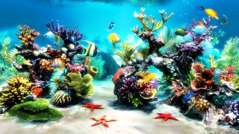 Its stunning photo realistic graphics recreate the beauty for Fish tank background ideas