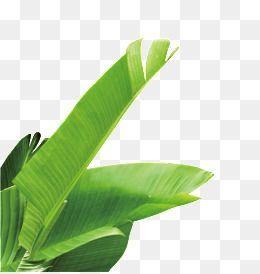 Banane GrГјn