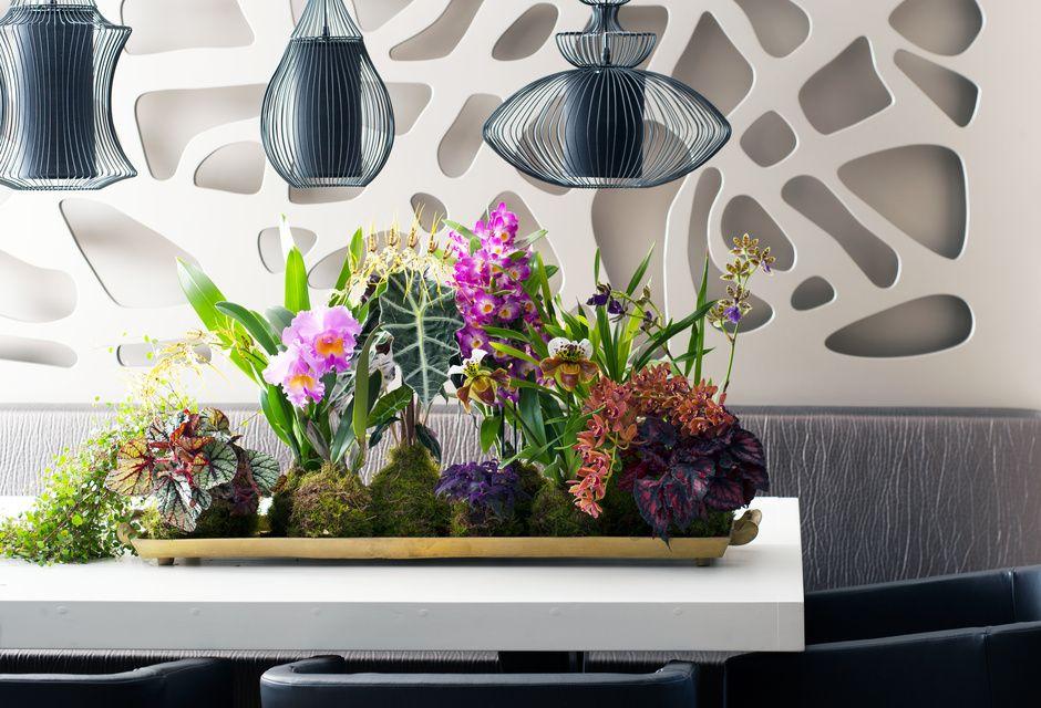 Bijzondere orchideeën zijn de Woonplanten van de maand november