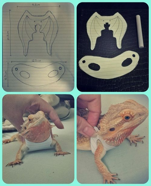 DIY lizard harness made for Super Pringle the Bearded Dragon - UNDER